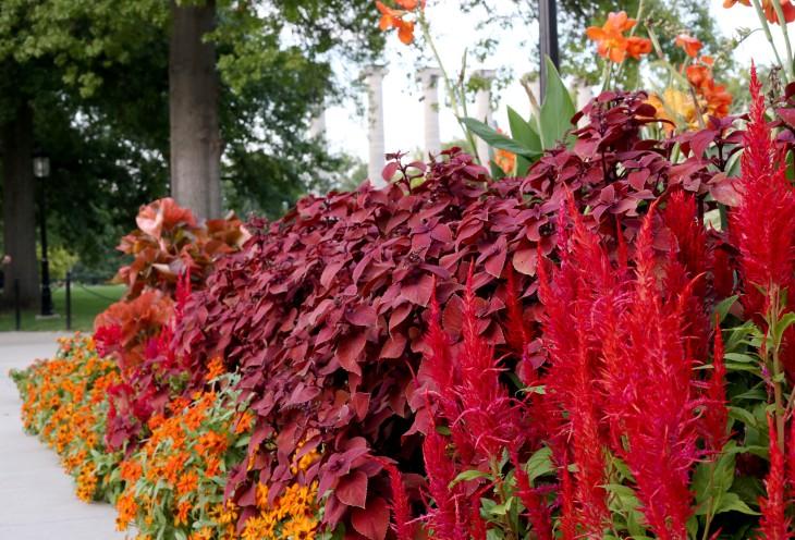 Raucolumnflowers